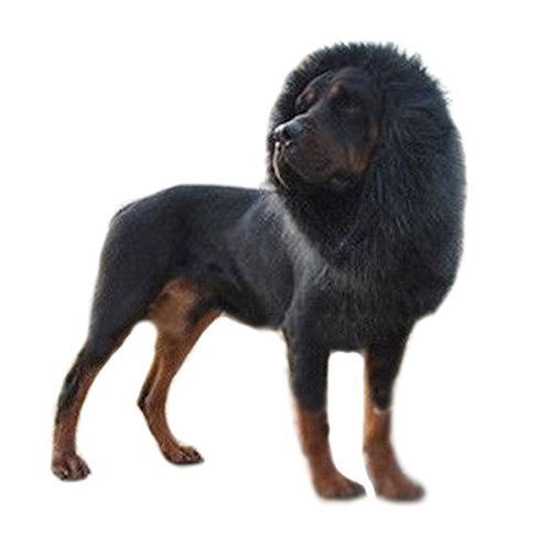 [econoLED ,Lion Mane for Dog, Dog Costume with Gift Lion Wig for Dog Large Pet Dog Cat Lion Wigs Mane Hair Festival Party Fancy Dress Clothes Costume] (Make Lion Costume For Dogs)