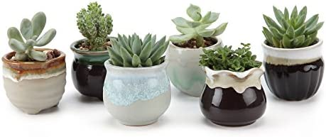 T4U 2.5 Inch Ceramic Flowing glaze solid Gray Base Serial Open Mouth Shape succulent Plant Pot/Cactus Plant Pot Flower Pot/Container/Planter Package 1 Pack of 6