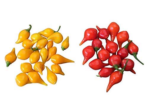 Red Biquinho Pepper Seeds (Capsicum Chinense) Brazilian Heirloom 10 Seeds (Peruvian Sweet Pepper Seeds)
