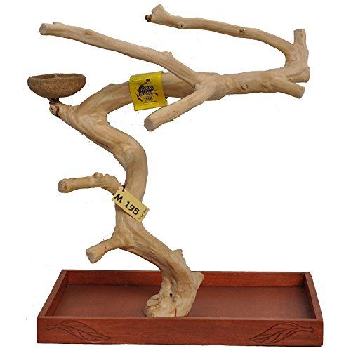 Parrot Wood - 3