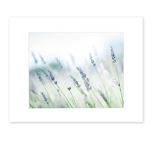8x10 Matted Photographic Print, Rustic Floral Wall Decor, 'Buds of Lavender'