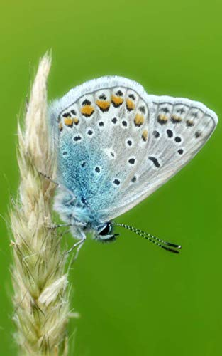 - Notebook: Common blue butterfly butterflies insect wing caterpillar moth larva pupa egg order