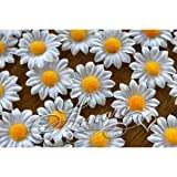 100 White Silk Daisy Flowers 1 inch
