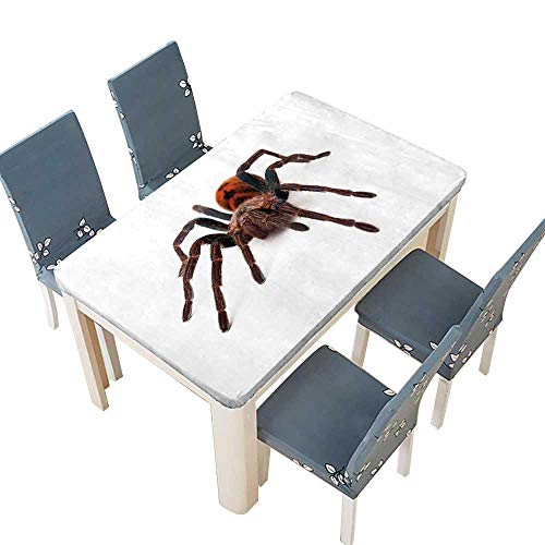 (Table in Washable Polyeste A large Greenbottle Blue Tarantula spider with an orange color body isolated on a white background Wedding Restaurant Party Decoration W49 x L88.5 INCH (Elastic Edge))