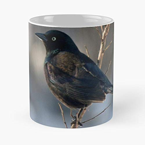 Black Feathers Bird Common Grackle - White -coffee Mug- Unique Birthday Gift-the Best Gift For Holidays- 11 Oz.