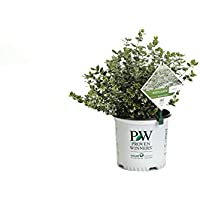 Save Big on the Proven Winners Live Outdoor Flowering Shrubs