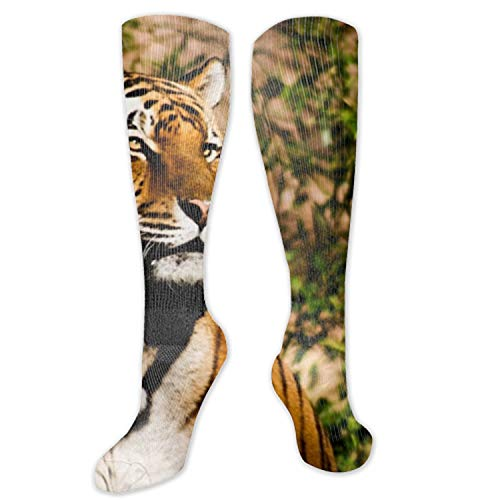 Compression Socks for Men & Women Tiger Wildcat Power Compression Stockings for Runners, Edema ()