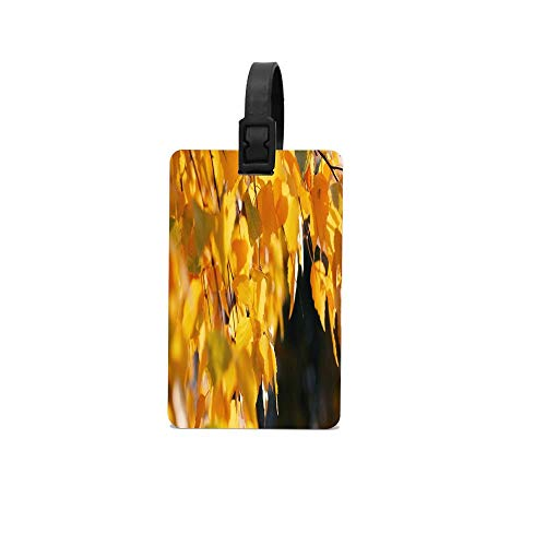 (Rdkekxoel Birch Leaves Autumn Yellow October Carry On Unisex Funny Luggage Tags School Bags Tags)
