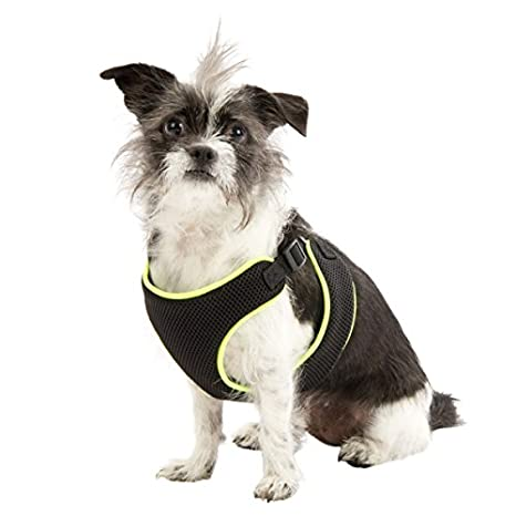 Amazon.com : Top Paw Dog Harness Black with Neon Green X-Small : Pet