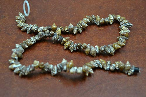 Bead Jewelry Making Art Supplies 100 PCS Small Brown Stripped Nassa SEA Shell Beading Beads 1 Strand