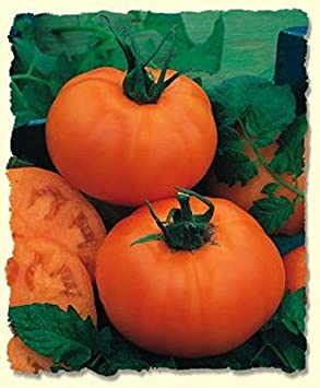 Tomato Seeds Tomato Chef/'s Choice Orange tomato F1 Hybrid 50 Seeds