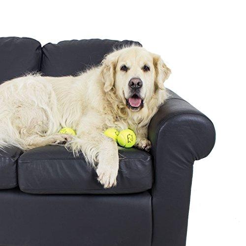 Nuevo 5 x alta calidad amarillo pelotas de tenis ideal para Golden Retriever perros: Amazon.es: Productos para mascotas