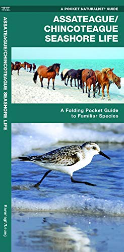 Assateague/Chincoteague Seashore Life: A Folding Pocket Guide to Familiar Species (A Pocket Naturalist Guide) (Pocket Ri Star)