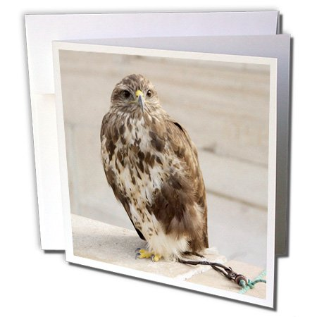 3dRose Hungary, Budapest, Castle Hill, falconry - EU13 CMI0317 - Cindy Miller Hopkins - Greeting Cards, 6 x 6 inches, set of 12 (Hungary Note)