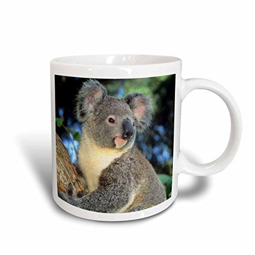 3dRose mug_85322_2 Koala Bear, Australia, Eucalyptus Tree Sa01 Ksc0000 Kevin Schafer Ceramic Mug, 15-Ounce (Best Small Microwave Australia)