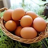【北海道十勝 くさなぎ農園】北海道産100%自家配合飼料 平飼い朝採り 有精自然卵 20個(割れ保証2個含む)
