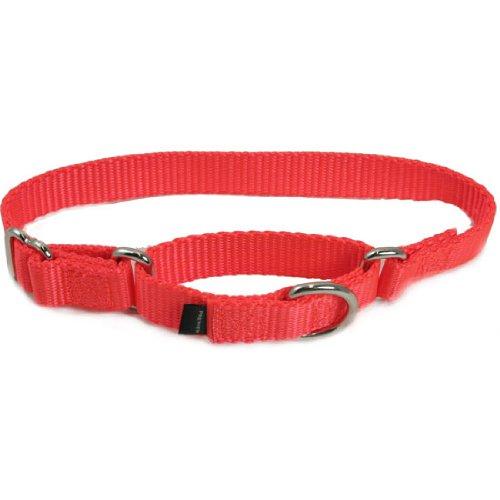 Premier Collar 1″ Medium, Blaze Orange, My Pet Supplies