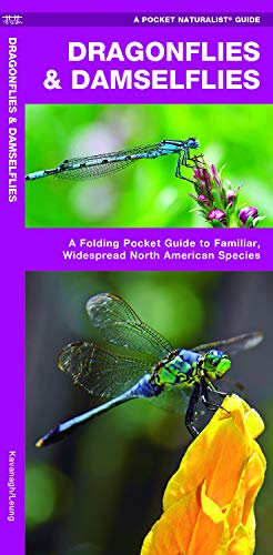 Dragonflies & Damselflies: A Folding Pocket Guide to Familiar, Widespread North American Species (Wildlife and Nature Identification)