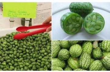 Man Friday 10pcs Super Mini Watermelon Seeds Thumb Seeds