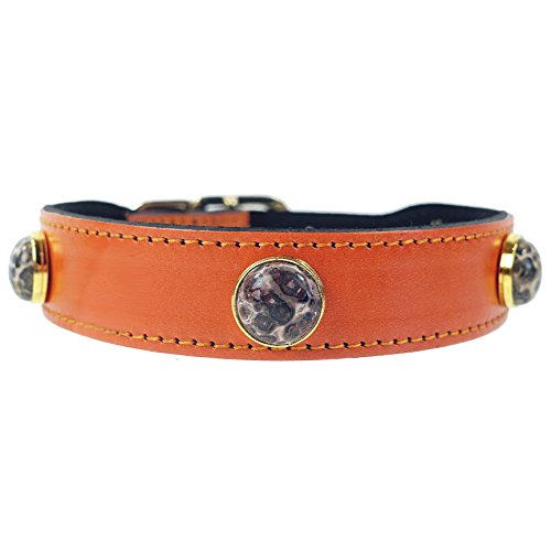 (Hartman & Rose Leather Dog Collar with Leopard Agate Semi Precious Stones - Au Natural Collection Jeweled Pet Collar Orange, 8 to 10 Inch)