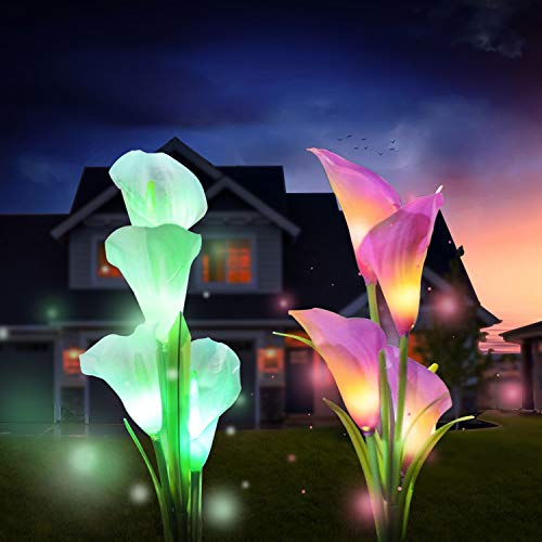 Outdoor Multi Color Changing Backyard Lily%EF%BC%88White Purple%EF%BC%89 product image