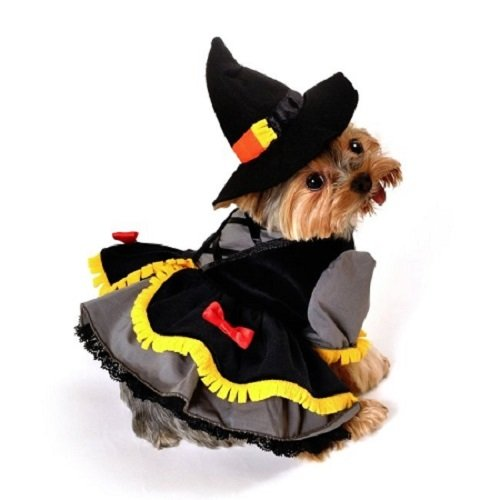 Domestic Pet Happy Halloween Wizard of Oz Scarecrow Witch Dog Costume