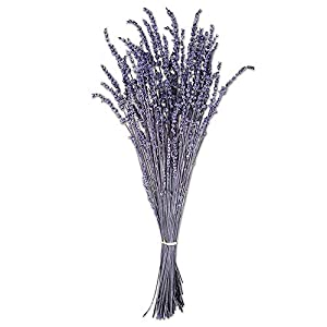 Ogi's Florist | 100% Real All Natural Premium Preserved Lavendar | No Water Needed, Last for Months | Perfect Alternative to Artificial & Dried Flowers for DIY Crafts, Decoration, Décor 23
