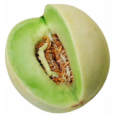 Honeydew Melon Seed, Green Melons, Heirloom Melon Seed, Non-GMO, Very Sweet 35ct : Garden & Outdoor
