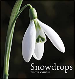 Snowdrops Gunter Waldorf 9780711233850 Amazon Com Books