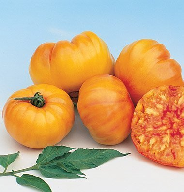 David's Garden Seeds Tomato Beefsteak Striped German D2372 (Orange) 50 Organic Heirloom Seeds