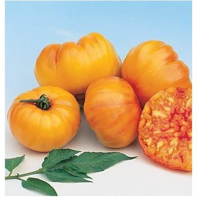 David's Garden Seeds Tomato Beefsteak Striped German SL2372 (Orange) 50 Non-GMO, Organic, Heirloom Seeds : Garden & Outdoor
