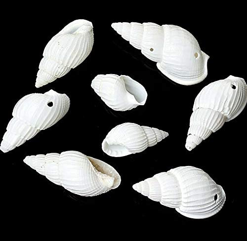 15 Shell Beads Great Beach Jewelry Item Natural Shells with Drilled Hole, Beading, Jewelry Making, DIY Crafting, Arts & Sewing by Perfect Beads Store ()