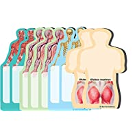 Anatomy Body Sticky Notes Collection, 9 Pack-100 Sheets Per Pack, Medical Note Pads and Great Gifts.