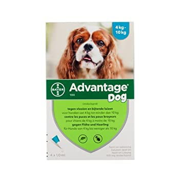 Advantage 100 (perros 4 - 10 kg) - 4 pipetas de 1 ml: Amazon.es: Productos para mascotas