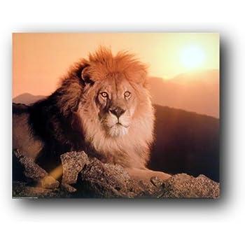BIG AFRICAN LION SITTING SUN PHOTO FINE ART PRINT POSTER HOME DECOR BMP009B