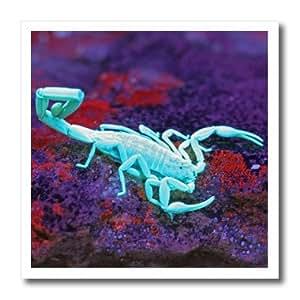 ht_94374_3 Danita Delimont - Scorpions - USA, Texas, Kimble County. Striped bark scorpion - US44 BJA0079 - Jaynes Gallery - Iron on Heat Transfers - 10x10 Iron on Heat Transfer for White Material