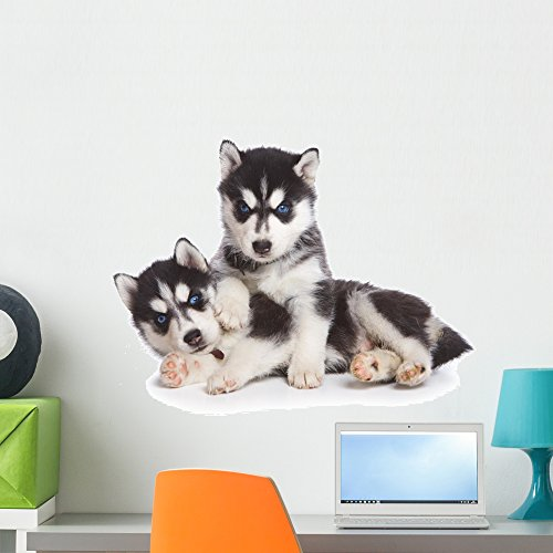 (Wallmonkeys Siberian Husky Puppy on White Wall Decal Peel and Stick Graphic WM134838 (24 in W x 16 in H))