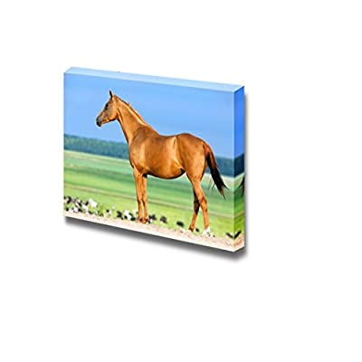 Canvas Prints Wall Art - Chestnut Budenny Horse Looking on The Cows at Field. | Modern Wall Decor/Home Art Stretched Gallery Canvas Wraps Giclee Print & Ready to Hang - 12