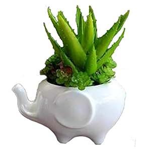 Wish You Have A Nice Day Set de 3moderno blanco de cerámica macetas suculentas/Mini flor contenedores de plantas