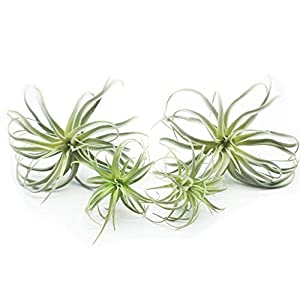 Yokoke Artificial Pineapple Grass Air Plants Fake Flowers Faux Succulents Flocking Tillandsia Bromeliads Home Garden Decor 4 Pcs 11 Inches Assortment 4