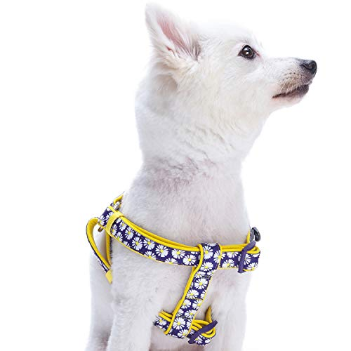 - Blueberry Pet 2 Patterns Soft & Comfy Step-in Spring Loving Daisy Prints Padded Dog Harness, Chest Girth 20