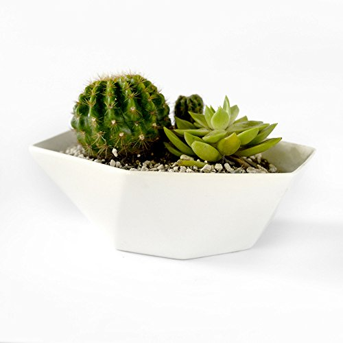 SilvineandSands 7 inch Geometric Minimalist White Planter Pot | Succulent and Flower Pot Container | Modern White Planter by SilvineandSands