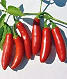 Serrano Pepper Seed, Hot Peppers, Heirloom, Organic, Non Gmo, 20+ Seeds, Garden