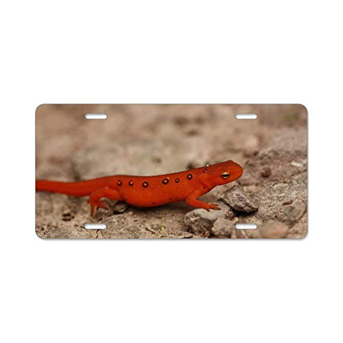 YEX Abstract Animal Eastern Newt Salamanders License Plate Frame Novelty Car Tag Frame Auto License Plate Holder 12