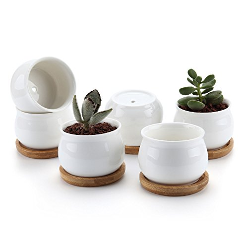 T4U 2.75 Inch Ceramic White Jar Shape Design succulent Plant Pot/Cactus Plant Pot Flower Pot with bamboo tray/Container/Planter White Package 1 Pack of 6 (Plants In A Jar)