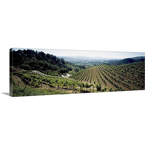 GREATBIGCANVAS Gallery-Wrapped Canvas Entitled Vineyard, Newton Vineyard, St. Helena, Napa Valley, Napa County, California by 60
