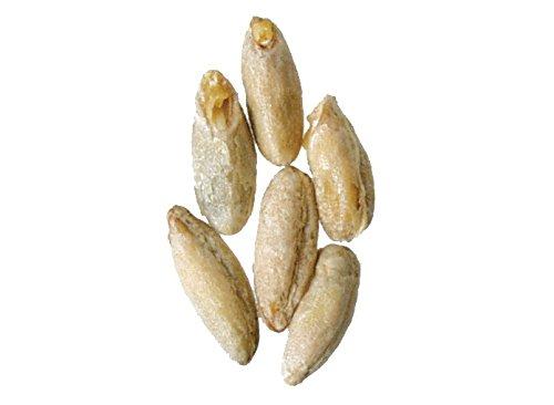 Rye Malt - Malt - Briess - Rye (50 lb Sack)