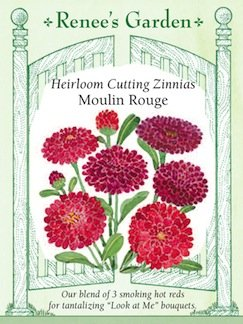 "Zinnia, Cutting ""Moulin Rouge"" - Heirloom"