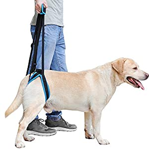 Momo Pet Dog Support Harness Rear Lifting Harness Adjustable Straps Veterinarian Approved for Canine K9 Help with Poor… Click on image for further info.