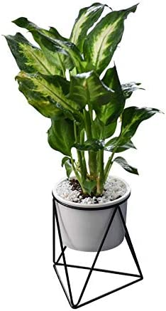 Amazon Com 1set Planter Pots Indoor 5 8 Inch Modern Plants And